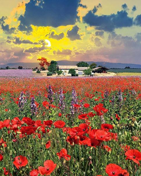 Provence, France 🇫🇷 ._._._._._.jpg