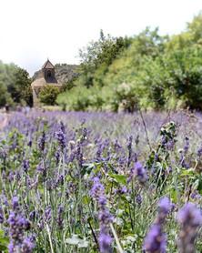 Abbaye de Sénanque, Provence, France 🇫🇷 ._._._._._.jpg