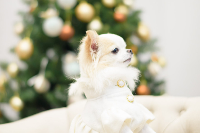 Christmas撮影会