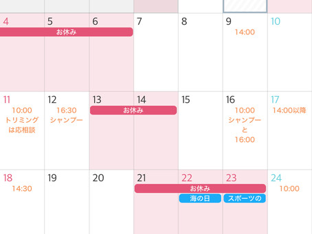 7月の営業日程とオススメオプション