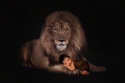 Newborn Photo shoot Colchester Lion
