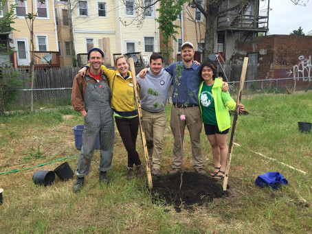 The Baltimore Orchard Project plants its 1,000th tree at Pop! Farm
