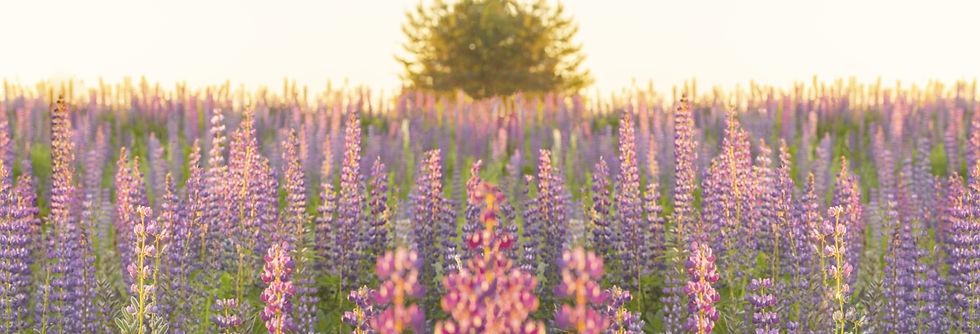 dreamstime_m_152394036.jpg
