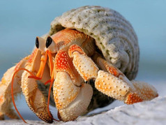 What Is A Hermit Crab