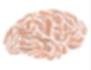 brain-544403_1920.png