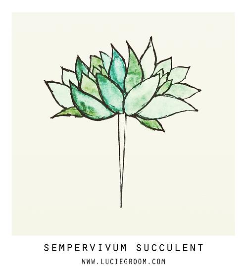 Sempervivum Succulent Teal