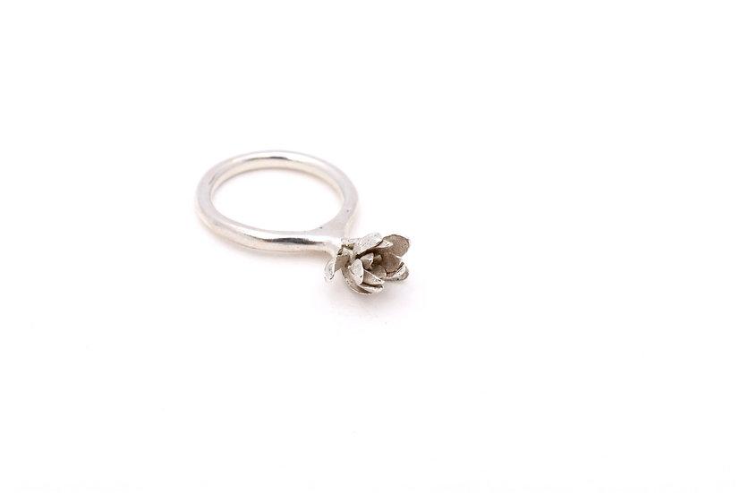 Sedum Ring