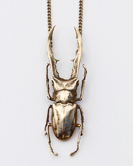 Gold Stag Beetle