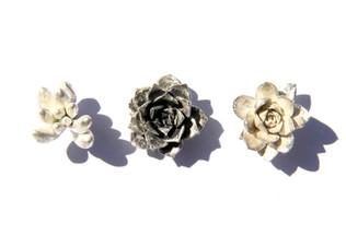 Succulent Pins