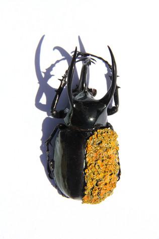 Lichen Beetle Object
