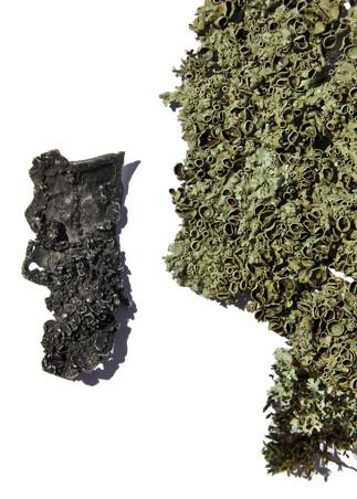 Lichen Pendant
