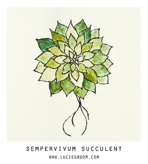 Sempervivum Succulent Yellow