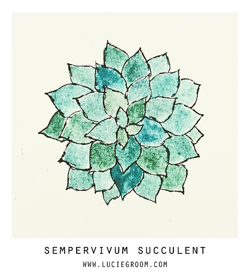 Sempervivum Succulent Blue