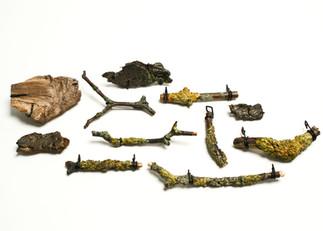Lichen Collection