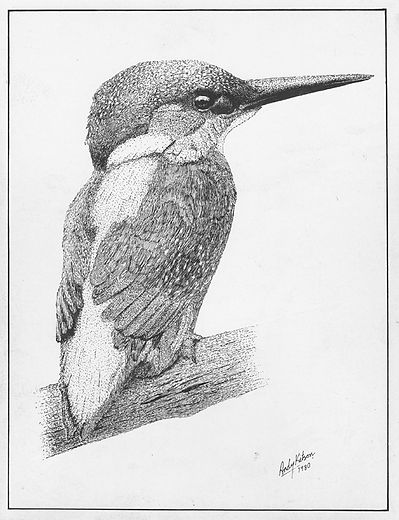 Kingfisher Ink.jpg