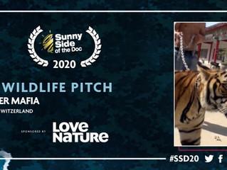 THE TIGER MAFIA - BEST WILDLIFE PITCH 2020