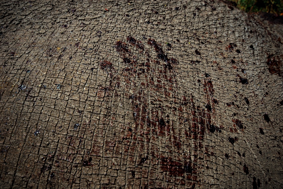 poachers bloody hand print on a dead rhino in Kenya
