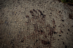 poachers bloody hand print on a dead rhino in Kenya