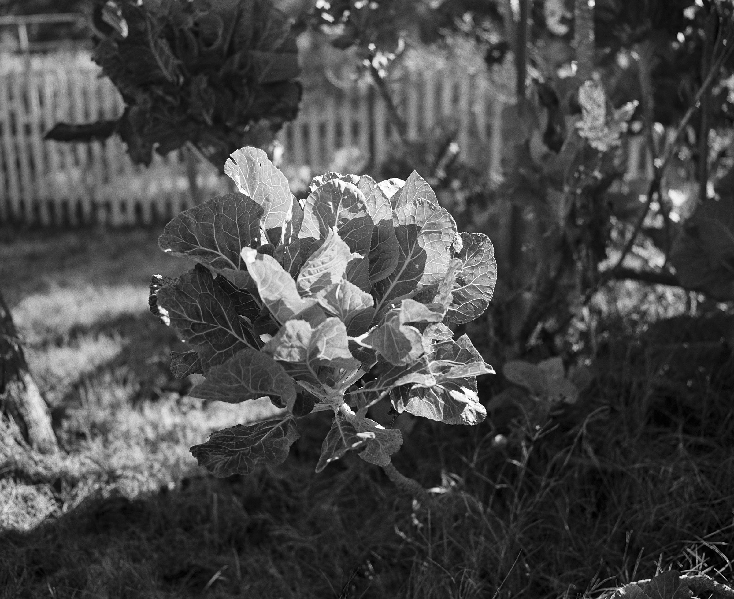 20131030-Kale_print
