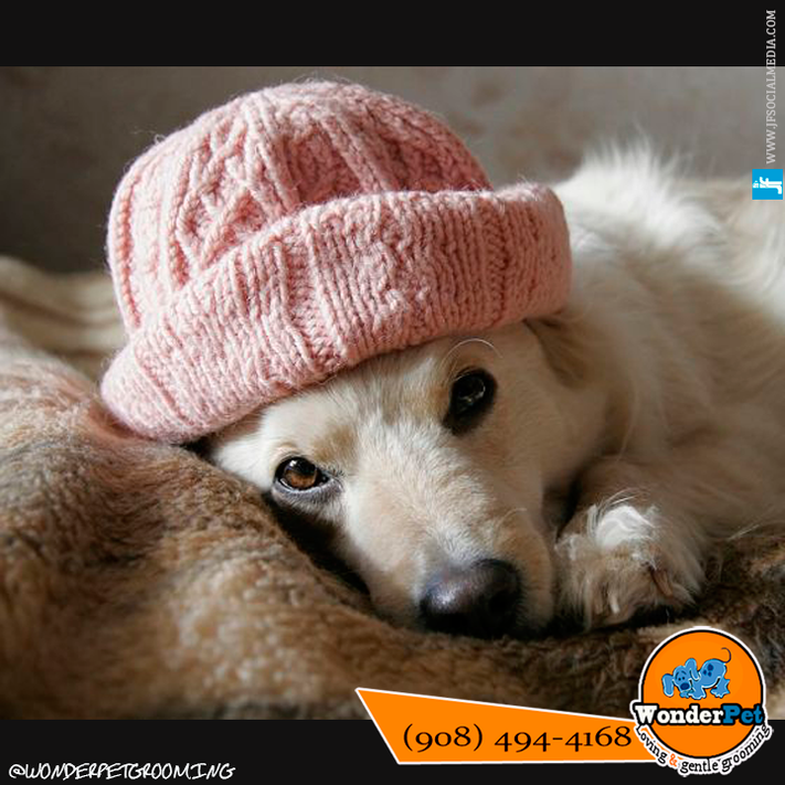 Keep your pet safe and comfortable during cold weather.