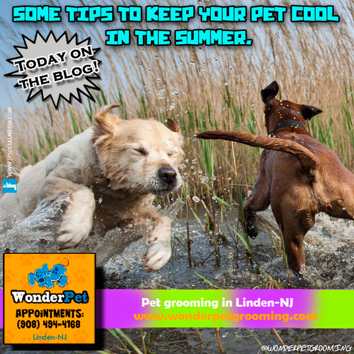 Some tips to keep your pet cool in the Summer.