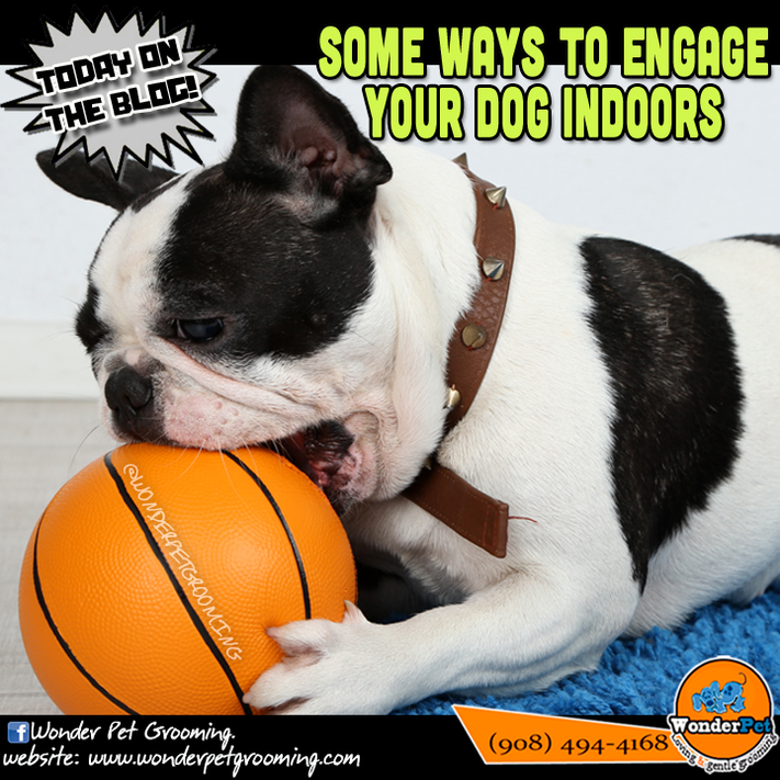 Some Ways to Engage Your Dog Indoors