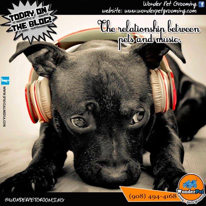 The relationship between pets and music.