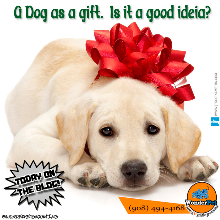 A dog as a gift. Is it a good idea?