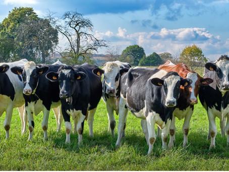 Livestock: A positive impact on social, economic and environmental development