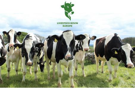 Fournisseur de bovins (vaches laitières et veaux d'engraissement) en France