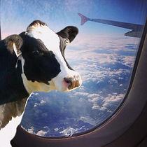 Le transport en avion