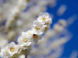 Flowerblossom.jpg