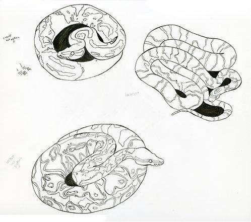 Snake drawings 2 piece ORIGINAL