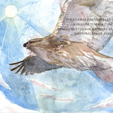eastern buzzard+watermark.jpg