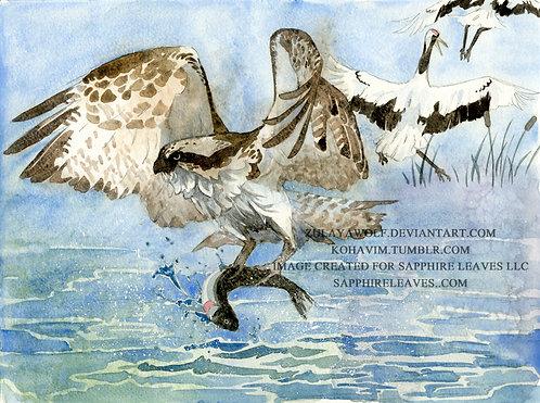 Osprey ORIGINAL watercolor