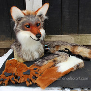 coyote partial small.jpg