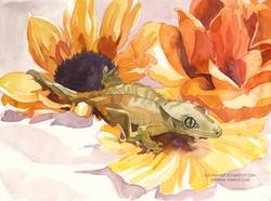 Flower Gecko
