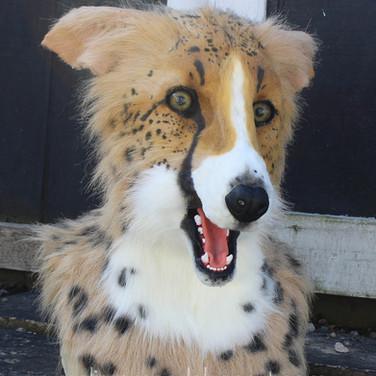 cheetah borzoi photo 1 small.jpg