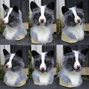 platinum fox turnaround small.jpg