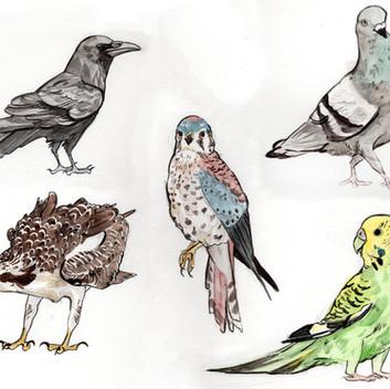 bird charms watercolor.jpg