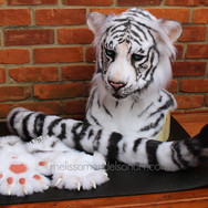 white tiger partial small.jpg
