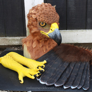 clanga spotted eagle partial small.jpg