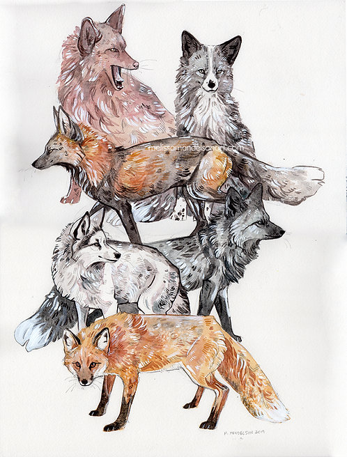 A Judgemental Collection of Foxes print