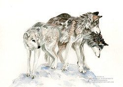 Wolfdog pack