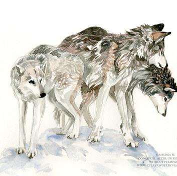 Wolfdog pack+watermark.jpg