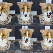 cheetah borzoi turnaround small.jpg