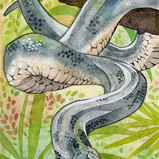 White lipped python small.jpg