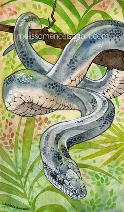White lipped python small
