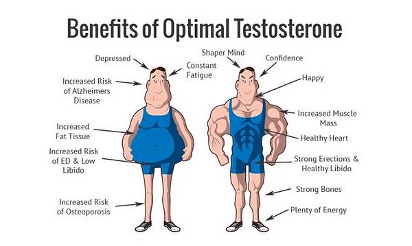 Does Tongkat Ali increase testosterone.p