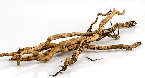 Tongkat Ali root.PNG